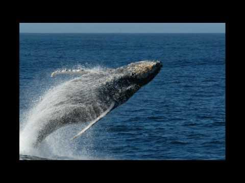 Whale bay af Uffe Richter