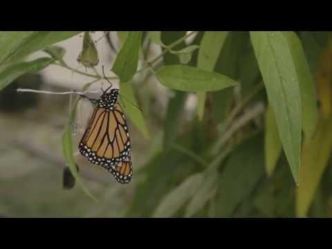 Monarch Pledge