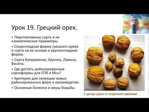 Лесосад из ореховых 2021