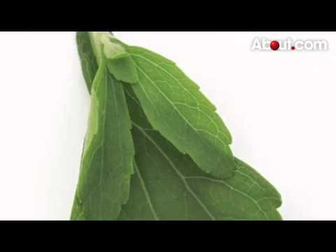 Hipertenzija 3 laipsnių gydymo vaistai