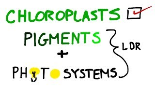Chloroplasts, Pigments And Photosystems in Photosynthesis