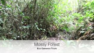 preview picture of video 'Cameron Highlands half day tour with Eco Cameron'