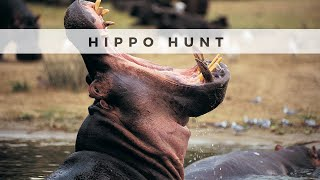 PH Journals: Hippo Hunt