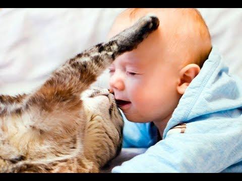 , title : 'Лучшая подборка Кошки и Дети!Приколы с Детьми! / Funny Videos Cats and Kids!'