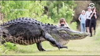 В поисках аллигаторов во Флориде