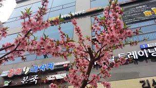 Сутки в Сеуле - Хондэ, мультяшная улица, Пушкин, Мапо, Ёыйдо