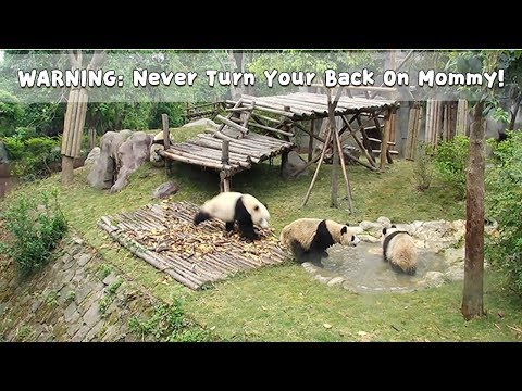 WARNING:NeverTurnYourBackOnMommy!   iPanda