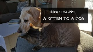 How To Introduce a Cat to A Dog   Bringing a Cat into a Home Where a Dog Lives