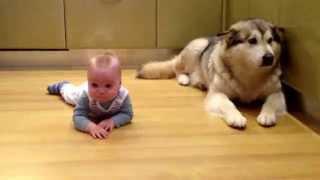 ребёнок и маламут