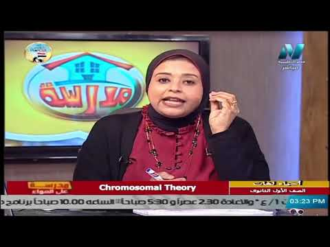 أحياء لغات للصف الأول الثانوي 2021 (ترم 2 ) الحلقة 1 – Chromosomal Theory