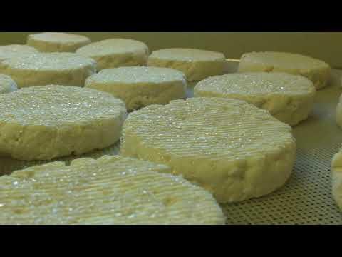 GAEC des Traversiers -Fromages et yaourt au lait de brebis,