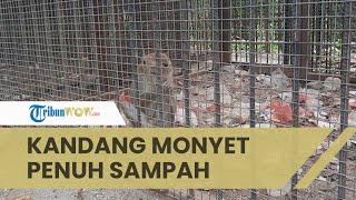 Viral Video Monyet di Mini Zoo Karawang Hidup dengan Kondisi Memprihatinkan, Kandang Dipenuhi Sampah