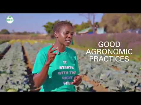 , title : 'CABBAGE PRODUCTION tips  with Elizabeth Benjamin