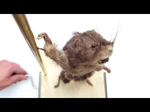 Kinetic Sculpture: Sex Sells!  (Warning: Dead Rat)