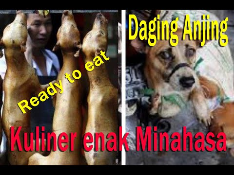 Video Dog meat on proces