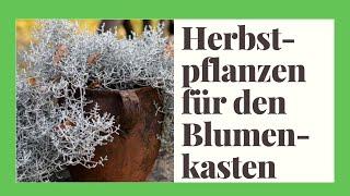 Die 19 schönsten Herbstpflanzen & Winterpflanzen für den Blumenkasten