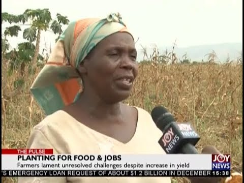 Planting for Food & Jobs – The Pulse on JoyNews (22-1-19)
