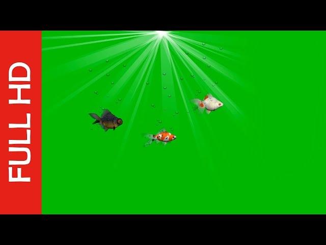 Tropical Fish Green Screen Video_Funny Rotating!