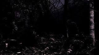 GAST   Morkret Kallar (2019) Black Market Metal Label   Album Stream