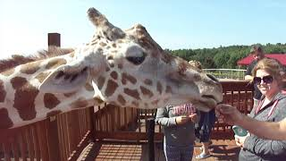 Meeting April the Giraffe!