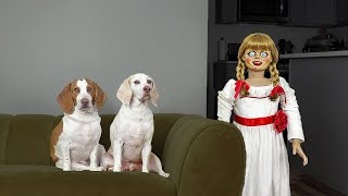 Dogs vs Annabelle Prank: Funny Dogs Maymo & Potpie Can't Get Rid of Scary Annabelle Doll!