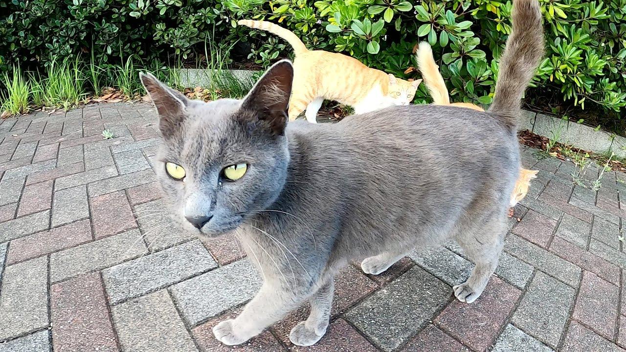 灰色猫と茶白猫が広場に集合して、一緒にご飯を食べに行く