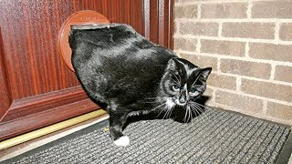 Super Funny Fat Cats Getting Stuck In Things Compilation