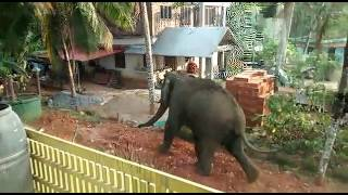Elephant Attack In Palakkad, Kerala, India