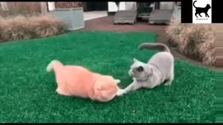 Коты разбойники  Лучшие приколы январь 2017