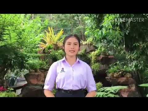 MTT 2019 Online Audition ธัญพร พรมแตง