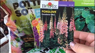Planting Flowers In Michigan | Spring Seeds And Bulbs | Dollar Tree Gladiolus