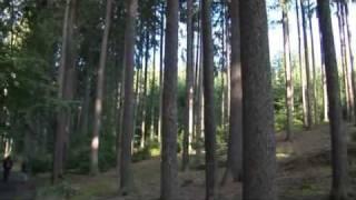 Lesnictví | www.e-senior.cz