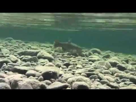 North shore massachusetts freshwater fishing for Freshwater fishing in massachusetts