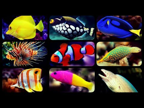 Aquarium Fish Wholesale Price For Aquarium Fish In India