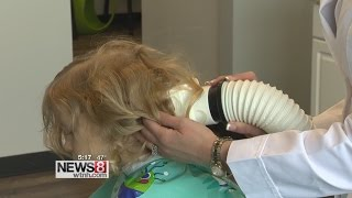 New FDA cleared medical device to kill off super resistant head lice