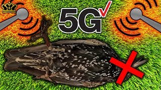 Is 5G Technology More Dangerous Than You Think? (NO MORE BIRDS)