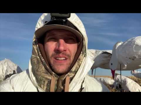 snow-goose-hunting-76-birds-alberta-2019