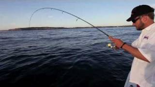 Sydney fishing - light tackle action on kingfish, bonito and amberjack