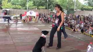 preview picture of video 'II concurso amateur canino Betxi bloque obediencia'