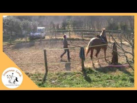 Reeducación Rita, 2º día, parte 3: primer galope con la cuerda, pasos atrás, parada emergencia