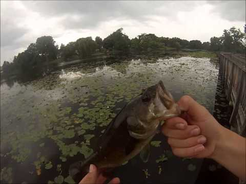 Bass Fishing Ponds Flipping Plastic Baits