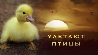 Улетают птицы - детская песня - клип - Наталия Лансере / children