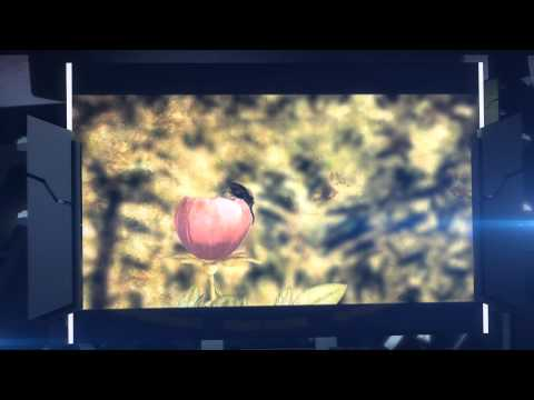 Animación Digital - Proexport