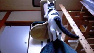 キャットタワーの登り方が変な猫 Cat More Funny Cat Climbing Tower