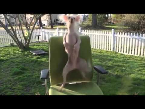 הכירו כמה כלבים עם יכולות ריקוד מדהימות!