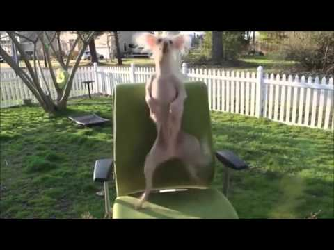 Funny Dancing Dogs Compilation - Try Not To Laugh!