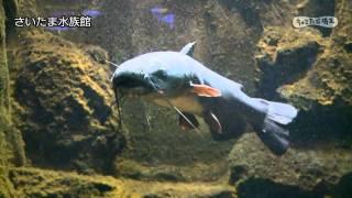 さいたま水族館埼玉県公式観光動画