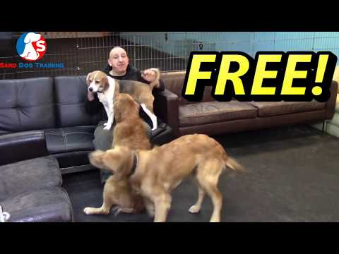 Free online course Intro | Join my online dog training course for ...