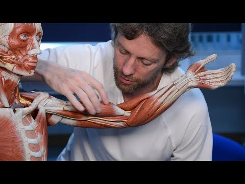 La gymnastique pour les bretelles des muscles du cou