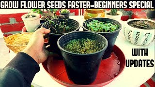 How To Grow Flower Seeds Faster (BEGINNERS SPECIAL)